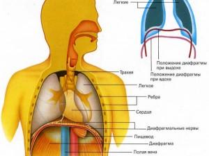 В Сарманово прошел научно-практический семинар «Болезни органов дыхания»