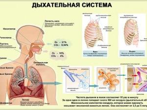 28 — 29 июня в Петрозаводске пройдет Всероссийская пульмонологическая конференция «Актуальные вопросы респираторной медицины»