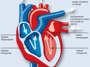 Глава Сахалина установил жесткие сроки полноценного запуска первичных сердечно-сосудистых отделений