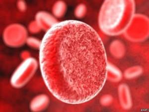 В Омской области появится банк клеток крови