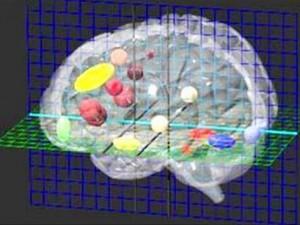 Обнаружен ген, отвечающий за формирование и развитие человеческого мозга