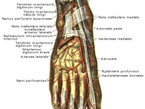 Медикаментозное лечение хронической критической ишемии нижних конечностей