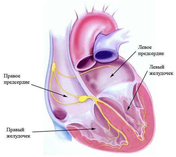 Препараты магния в комплексной терапии дисплазии соединительной ткани сердца у детей и подростков