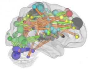Разработан метод оценки зрелости мозга с помощью МРТ