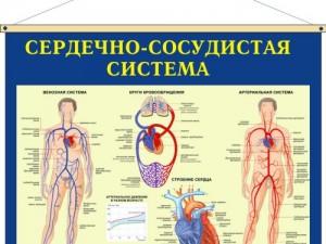 При стабильной коронарной болезни сердца индуцируемая ишемия миокарда, но не стенокардия, является неблагоприятным прогностическим фактором