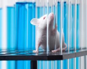 Новый препарат останавливает возрастную потерю памяти