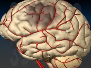 Ключ к гематоэнцефалическому барьеру открывает путь для лечения болезни Альцгеймера и инсульта