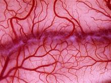 Исследователи создали не имеющие аналогов искусственные кровеносные сосуды
