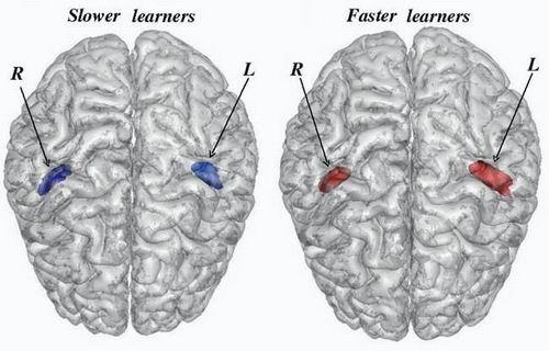 Объем мозга человека уменьшается в ходе его эволюции