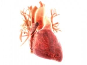 Уникальные высокотехнологичные эндоваскулярные операции при нарушениях ритма сердца будут проведены в Казани