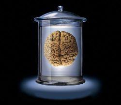 Как мозг самоизлечивается?