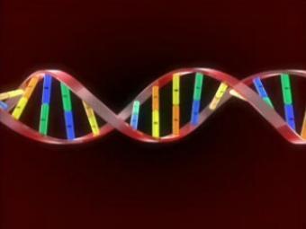 Риск отторжения будут определять по донорской ДНК в крови