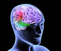 Расстройство поведения у подростков объясняется изменениями в их головном мозге
