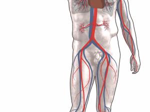 Роль и возможности лодыжечно–плечевого индекса систолического давления при профилактических обследованиях