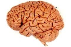 Нюх… развивает мозг