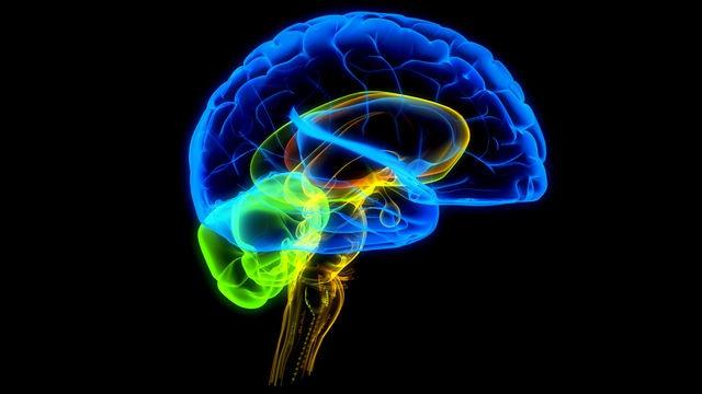 Самые простые способы поддержать здоровье мозга