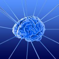 Что не убивает мозг — делает его сильнее