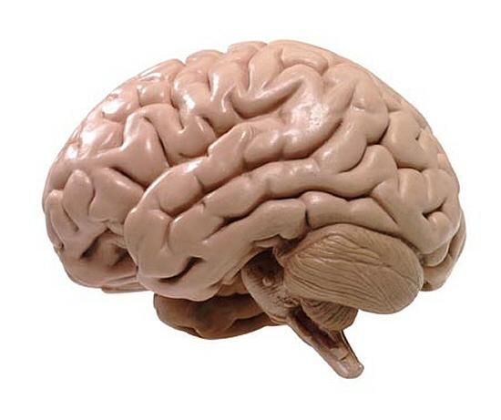 Опубликован список продуктов питания, повышающих эффективность работы головного мозга человека