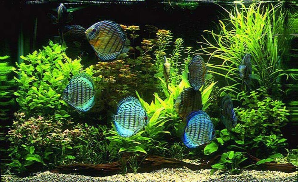 Стресс лечит аквариум