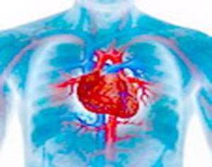 Клетки сердца способны реактивироваться