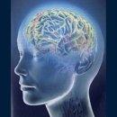 Эксперты доказали: только у человека с возрастом усыхает мозг