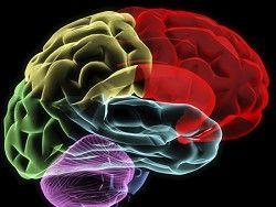 Белковая диета вызывает дегенерацию головного мозга