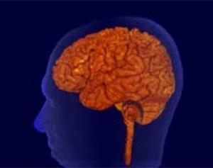 Ученые открыли механизм старения мозга