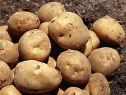 Картофель и овсянка помогут снизить кровяное давление