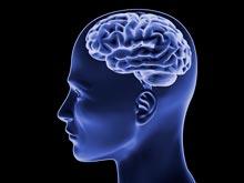 Составлен список самых популярных мифов о человеческом мозге