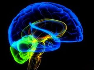 Развитие головного мозга не прекращается в юности