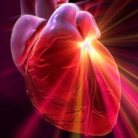 Человеческое сердце может восстанавливать себя после инфаркта