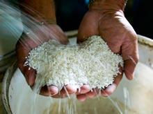 Особый сорт риса стал источником важного компонента крови