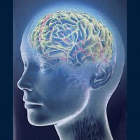Ученые: автомобильные пробки могут повреждать мозг