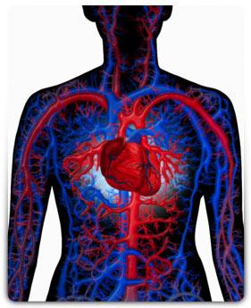Ученые готовятся запустить в кровеносную систему роботов