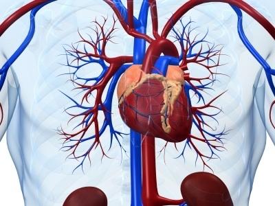 Возможности развития кардиологической помощи в Приволжском федеральном округе