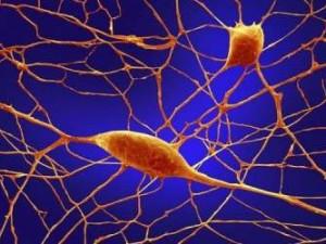 Нервные клетки теперь могут восстанавливаться