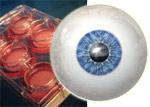 Получен глаз из клеток крови