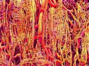 Тканевые инженеры освоили 3D-печать сети кровеносных сосудов на сахарной матрице
