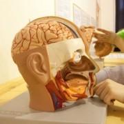 Стартует самое масштабное исследование мозга