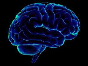 Американские исследователи совершили прорыв в области мозга человека