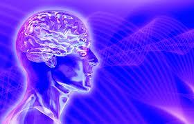 Мозг становится прозрачным