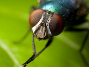 На самом ли деле мозг человека и мухи работает одинаково?