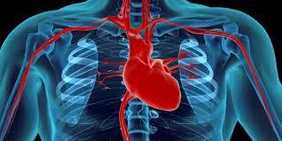 Эстроген связан с внезапной остановкой сердца