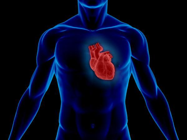 Гипертрофическая кардиомиопатия – Лечение дома