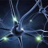 Ученым удалось зафиксировать работу координатных нейронов человеческого мозга