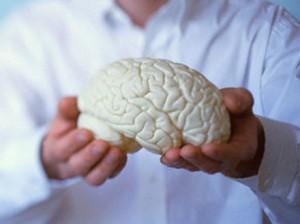 Принцип работы человеческого мозга