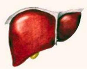 Цирроз печени вредит мозгу и сердцу