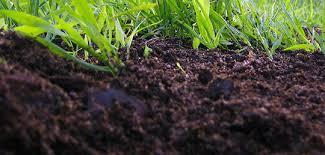 Качественный чернозем от компании АльтИнвестСтрой – гарантия получения богатого урожая