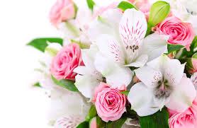 Цветы от «Яны» — лучший подарок любимым!