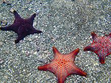 Морские звезды содержат в себе ключ к лечению инсульта
